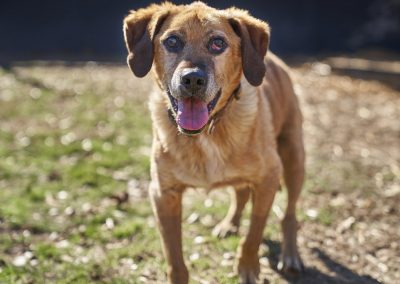 Barney Dog Who Is Ready to Be Adopted